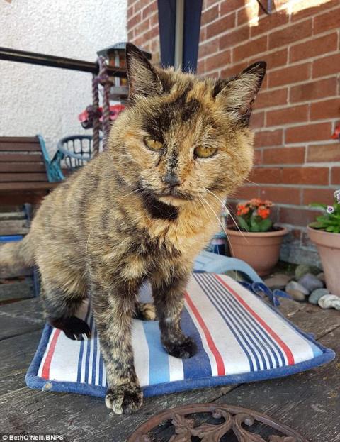 Старейшая кошка в мире успеш…
