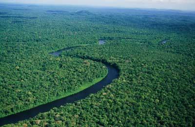 Дикая природа Амазонки. Дикое царство.
