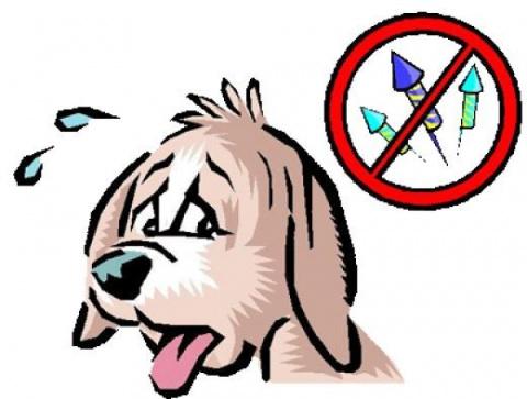 Ветеринар: как избежать пани…