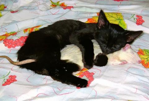Необычные спящие друзья, которые растопят ваше сердце