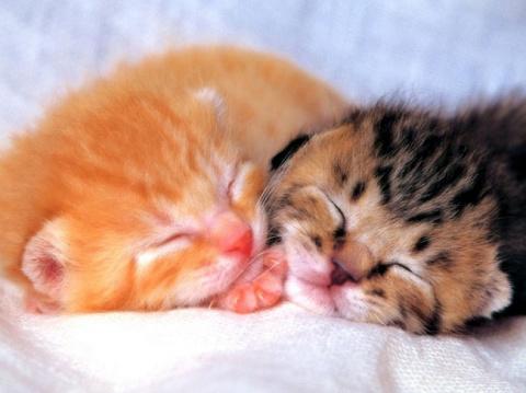 Два кота в одном доме: как сделать из них дружную банду?
