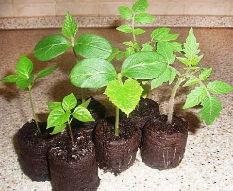 20 лучших советов по выращиванию рассады