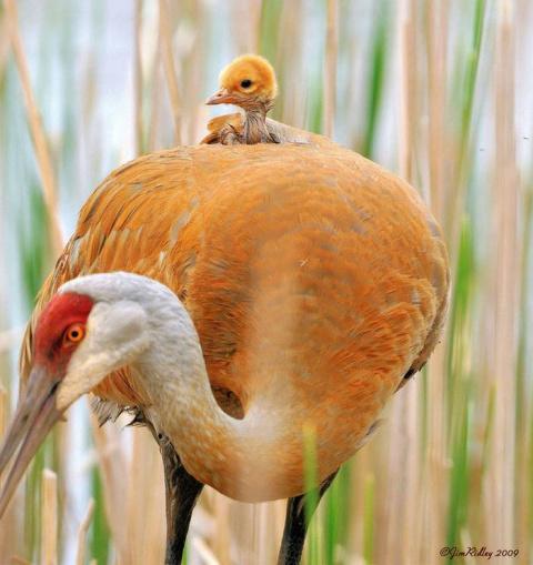 23 семьи диких животных, которые заставят ваше сердце растаять