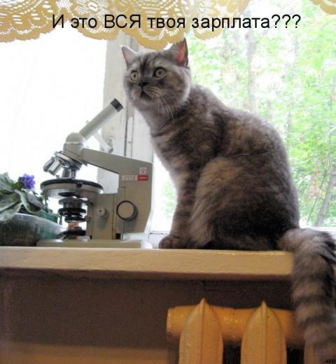 http://mtdata.ru/u23/photo3719/20715292068-0/big.jpeg