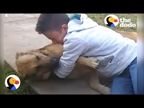 Мальчик нашел пропавшую собаку спустя 8 месяцев. Их встреча растопит даже ледяное сердце!