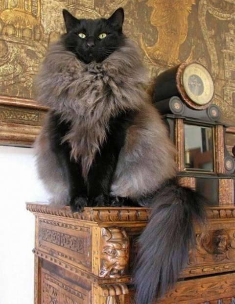 С ними лучше не шутить — 12 котов, которые подняли дерзость на новый уровень
