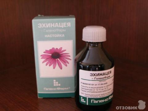 Настойка эхинацеи для поддержания иммунитета действует против вирусов