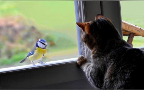 Если птица стучится в окно... Приметы