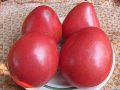 Интересный факт о томатах, о…