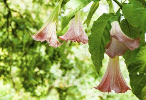 10 смертельно опасных цветов