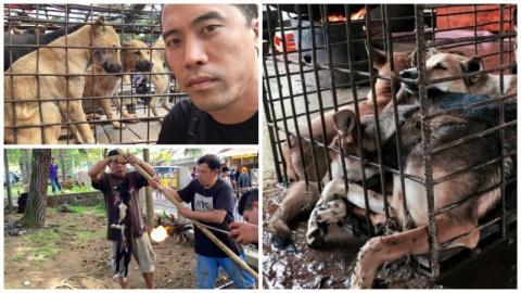 Этот парень спас около тысячи собак от смерти на ежегодном фестивале собачьего мяса в Китае