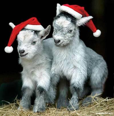 Про подарки и Новогодние поздравлялки!
