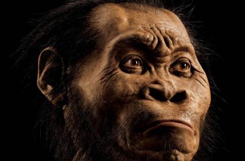 Homo naledi был деградировав…