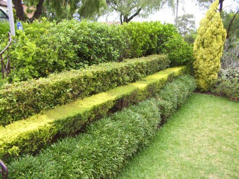 Живая изгородь: 12 примеров для зеленого забора