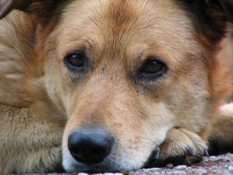 День зачистки от собак