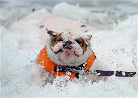 Собаки-серферы (9 фото)
