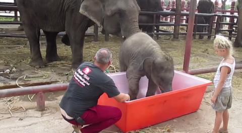 Неуклюжий слонёнок взорвал и…