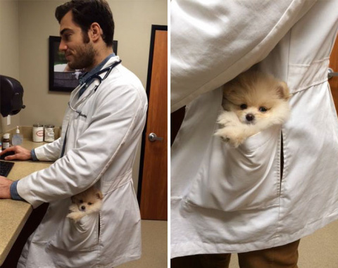 The Hottest Animal Doctor Ever That'll Make You Want To Get Your Pet Checked