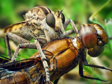 25 макро фотографий насекомы…