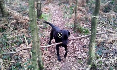Решил проблему умный пес - видео