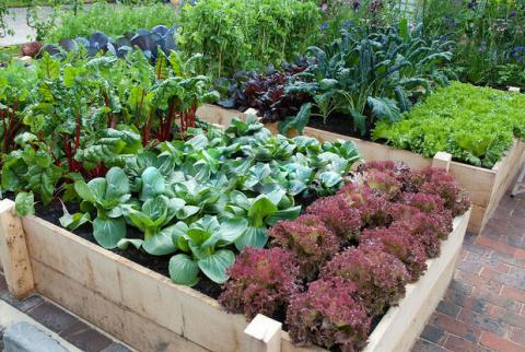 Совместимость ароматических трав с овощами на вашем огороде