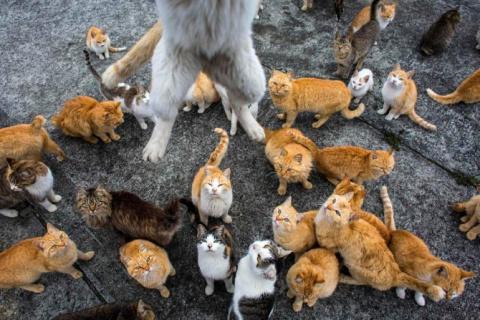 В деревне с названием Кошки