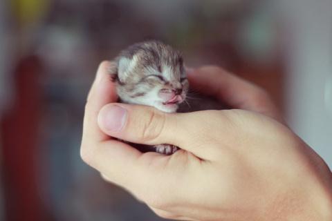 Не только котята, но только милахи!