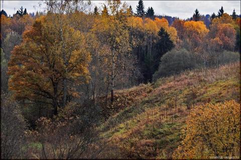 Портреты деревьев в ноябре