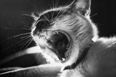 Девушка спасается от страхов с помощью фотосъемки кошек