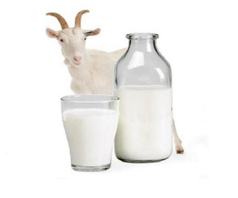 Вкусно и полезно. Козье молоко