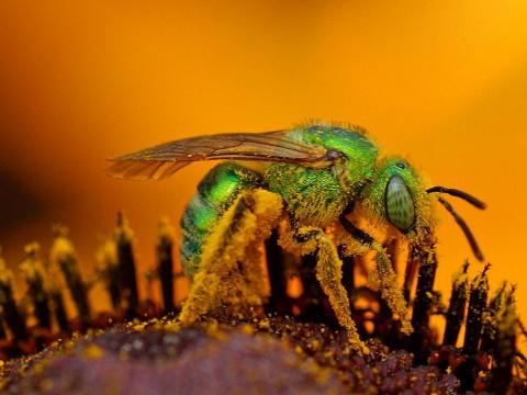 10 насекомых с самым болезне…