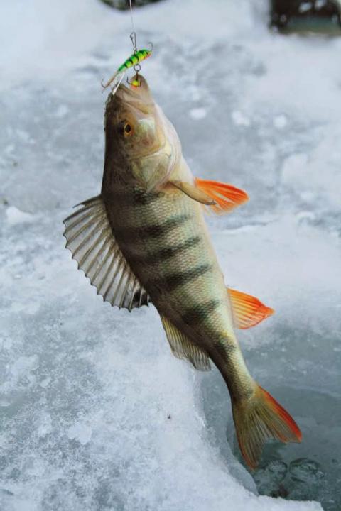 Рыбалка в марте на балансиры