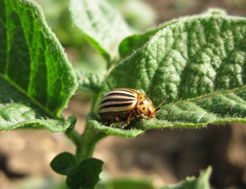 Поможем урожаю. Средствa для защиты растений