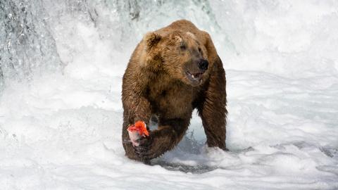 Секреты рыбалки от медведей