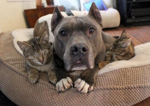 Трем слепым кошкам помогают …