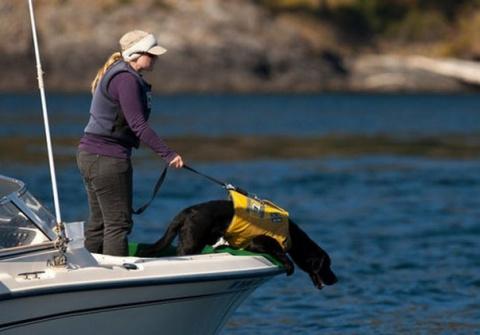 Бывший бродячий пес стал спасителем китов.