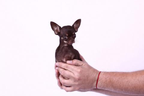 10 невероятных собак-рекордс…