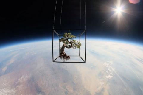 Невероятный полет растений в космос