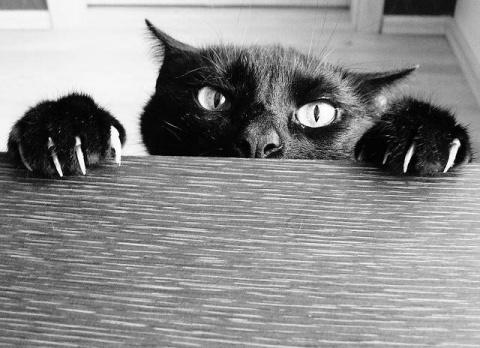Подборка для любителей кошек