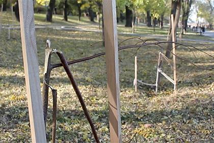 В Одессе уничтожили аллею Не…