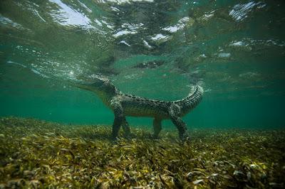 Как я крокодилов фотографировал