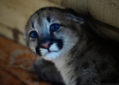 Маленький попрошайка- Пум-Пумыч, живет в обычной Московской квартире, вместе с тремя котами