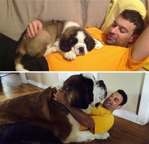 Как быстро взрослеют собаки