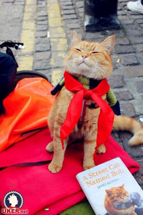 Рыжий кот Боб (30 фото)