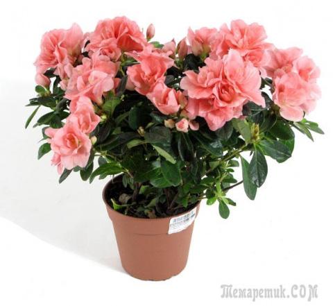 Какие цветочки должны быть дома обязательно