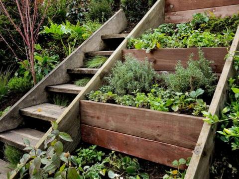Лекарственные растения у себя в огороде