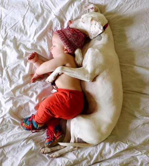 Собака с тяжёлым прошлым нак…