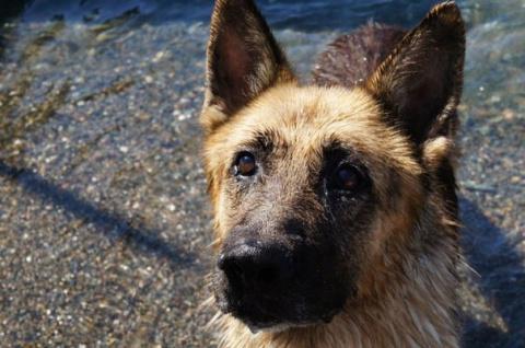 В Абхазии пес два года ждет …