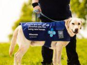 Собаки смогут принимать платежи