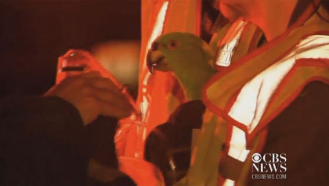 Оставленные в загоревшемся доме попугаи вызвали пожарных